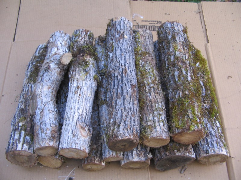 White Oak Firewood For Sale