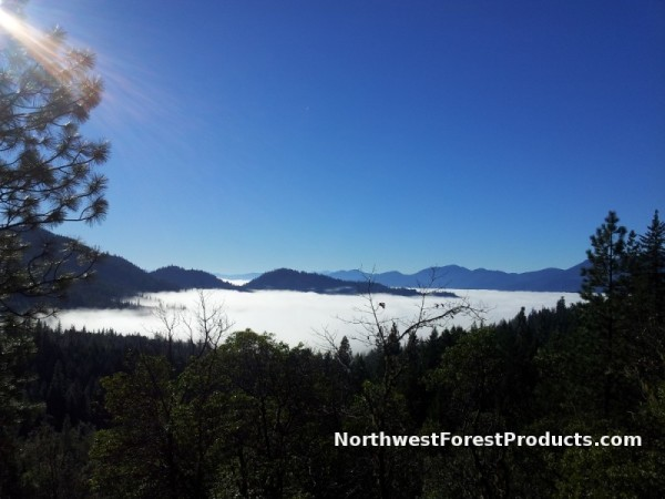 Northwest Forest Products